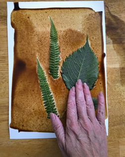 A hand pressing leaves on to the wet coffee washed paper