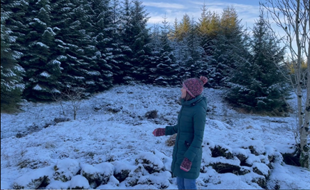 A person looking at woodland landscape of fir trees with snow on them, and snow on the ground.